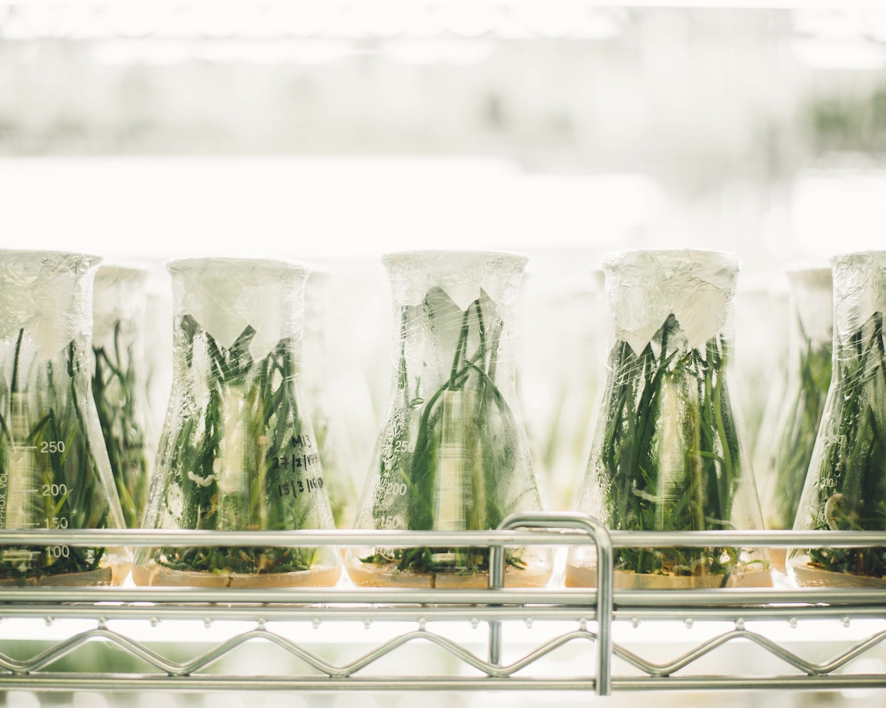 Un comité científico internacional estudiará los desafíos de la alimentación en 2050