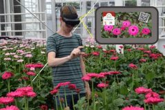 AR glasses tell if gerbera can be harvested