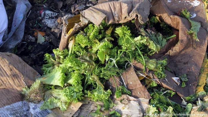 Discarded lettuce sits among other trash