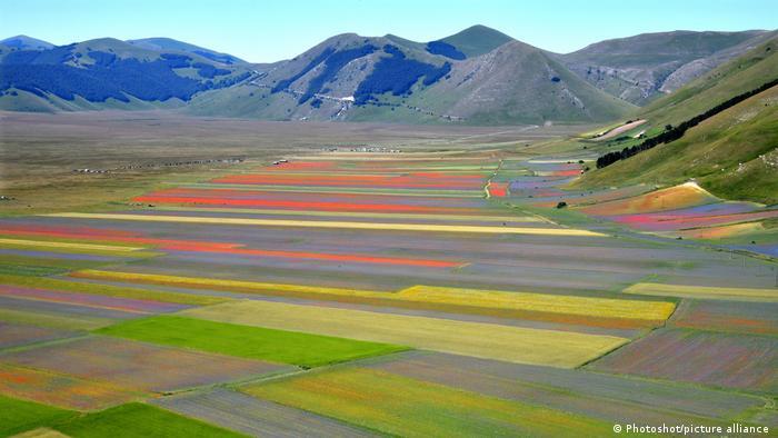 Flowering of lentils fields in Perugia, Italy