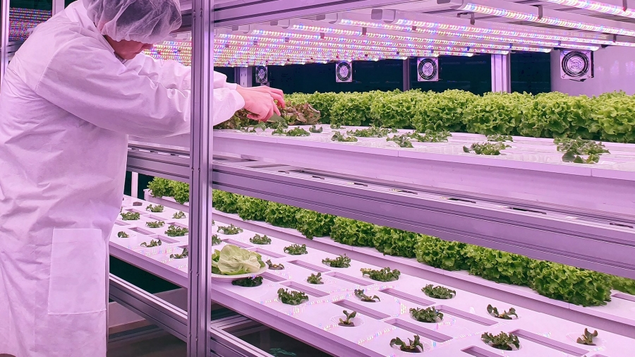 Vertical farming: a future way to feed urban populations?
