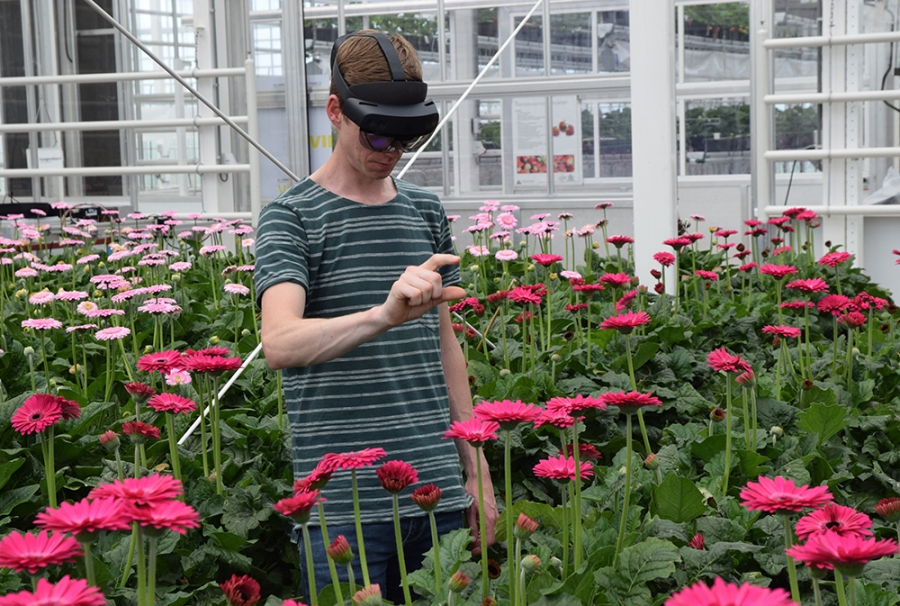 AR glasses tell if gerbera can be harvested – WUR