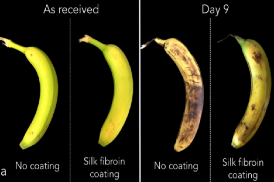 MIT startup wraps food in silk for better shelf life | MIT News