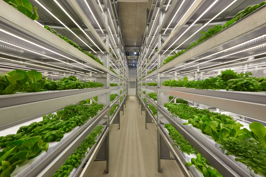 Growing up: the indoor farming boom – Foodservice Consultants